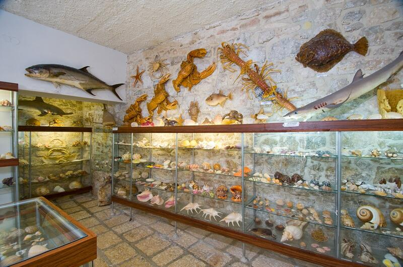 Malacological Museum